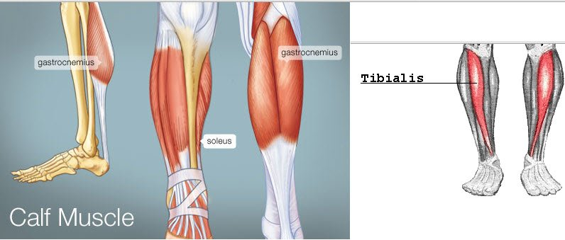 how to stop cramp in your calf muscle